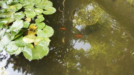 Ялта. Никитский ботанический сад