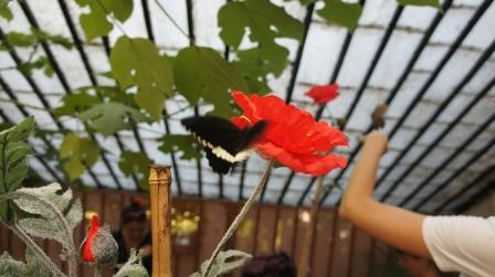 Ялта. Выставка бабочек в Никитском ботаническом саду