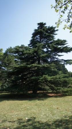 Алупка. В парке дворца графа Воронцова собраны уникальные растения
